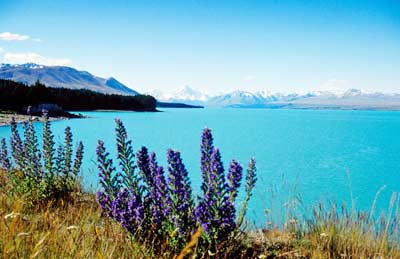 10-26C-A--Lake-Pukaki,-ADAMS-HANSEN-STOCK-PHOTOS-edited-for-EHnet