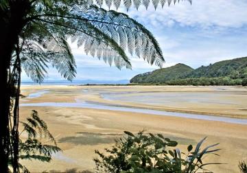 9-27-I--NZ-tree-fern-lowtide-beach-Abel-Tasman-NP-NZ-(2)